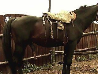 DrTuber Video - Horny Grandpa Fucks Rodeo Babe